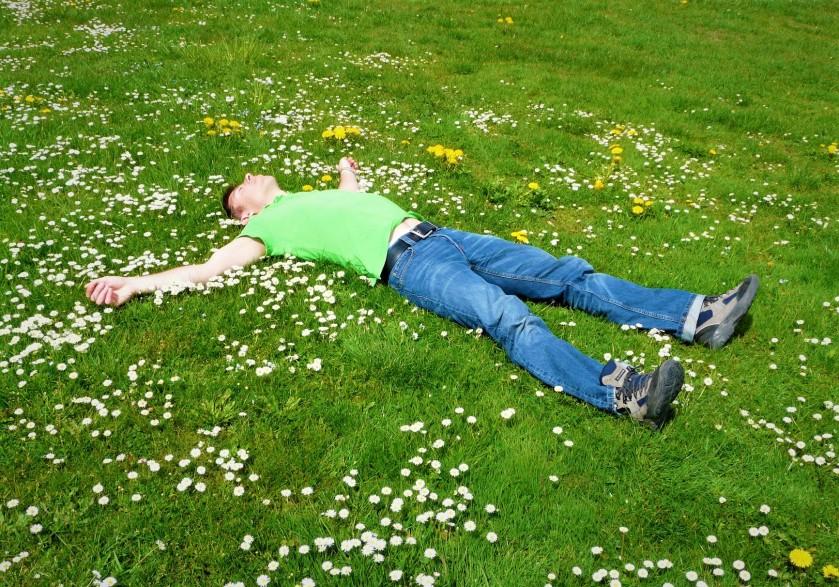 resting in field pixabay